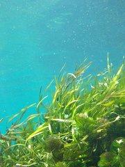 Algenzeep - Chlorella en Kelp