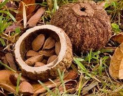 Paranotenolie, Brazil Nut - Huid en Haar