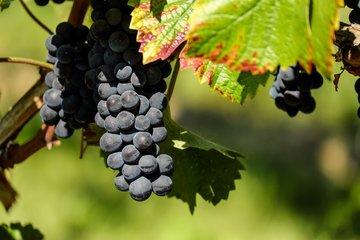 Druivenpitolie | Gezicht, Huid & Haarverzorging