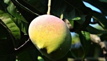 Mango Butter | Huid & Haar