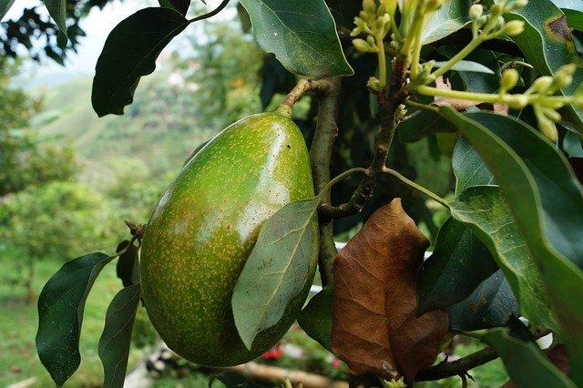 Avocado-Butter-Huid-en-Haar