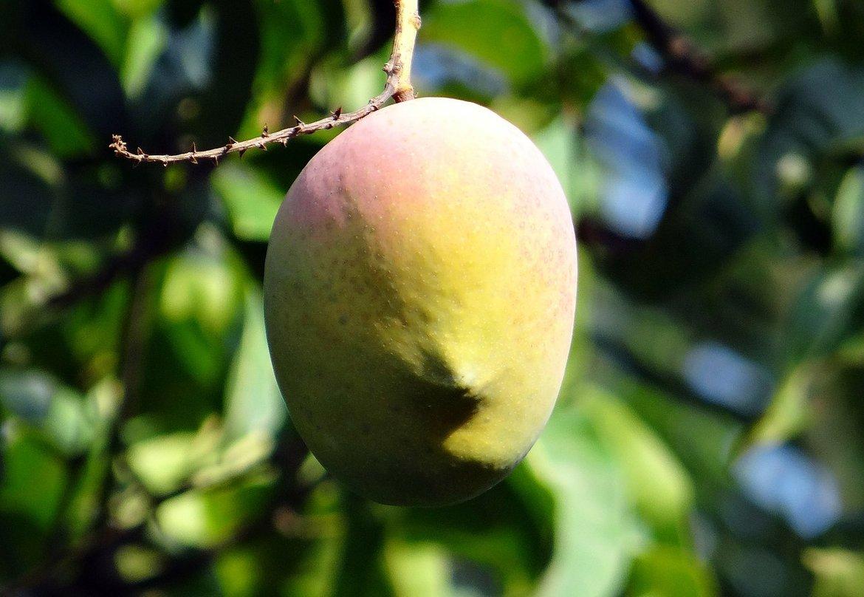 Mango-Butter-Huid-en-Haar