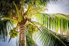 Kokosolie-Gezicht-Huid-en-Haar