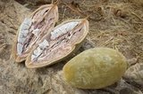 baobab vrucht