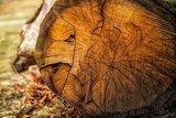 Etherische houtoliën