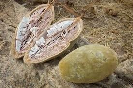 Baobab Olie Puur 100ml flacon
