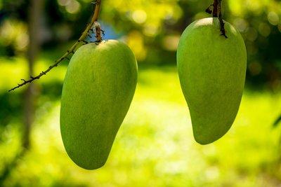 Mango Olie Puur Literfles