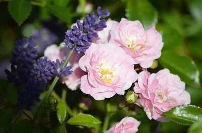 bloemen etherische set